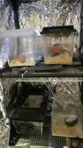 爬虫類 温室 自作